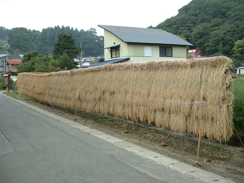 Rice bundles drying beside the road